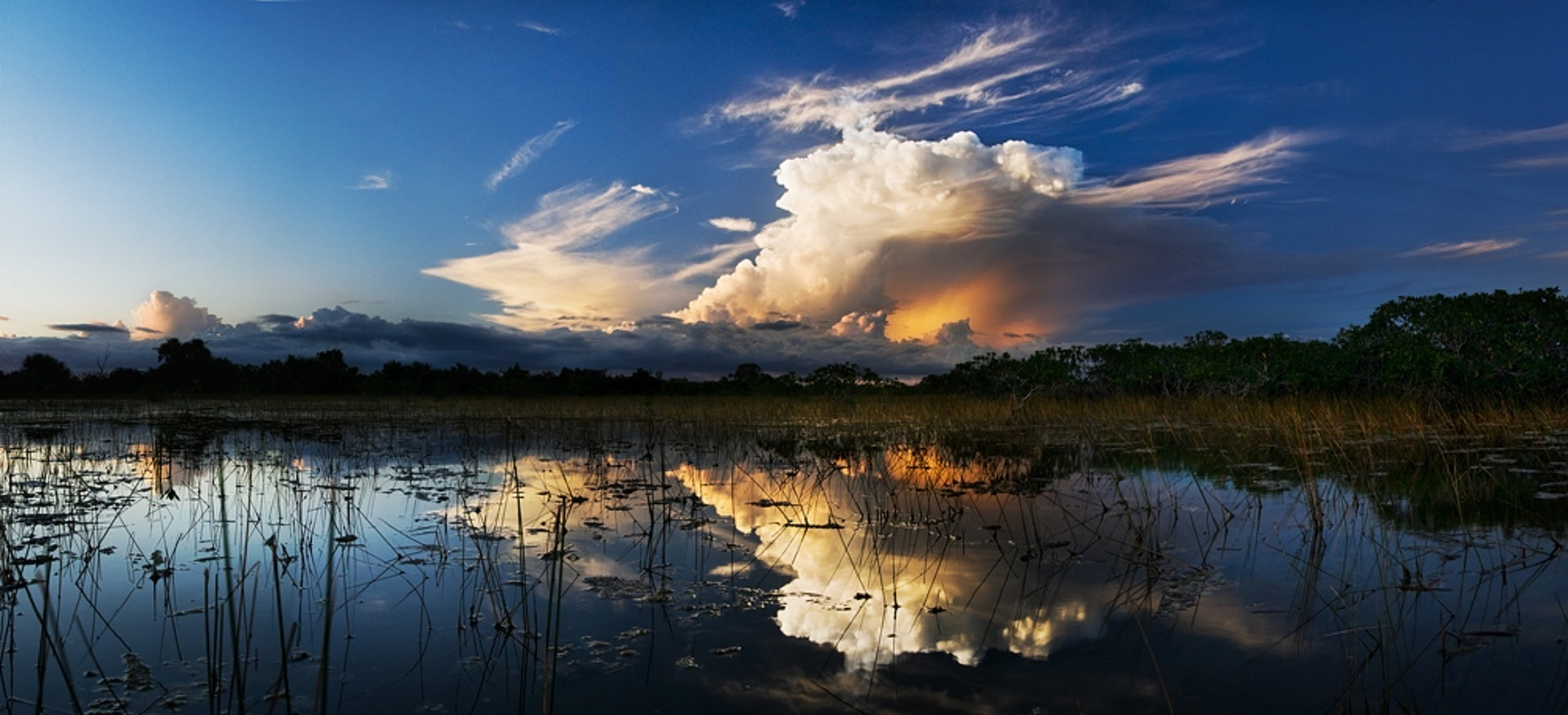 Florida Ecosystems Threatened by Climate Warming