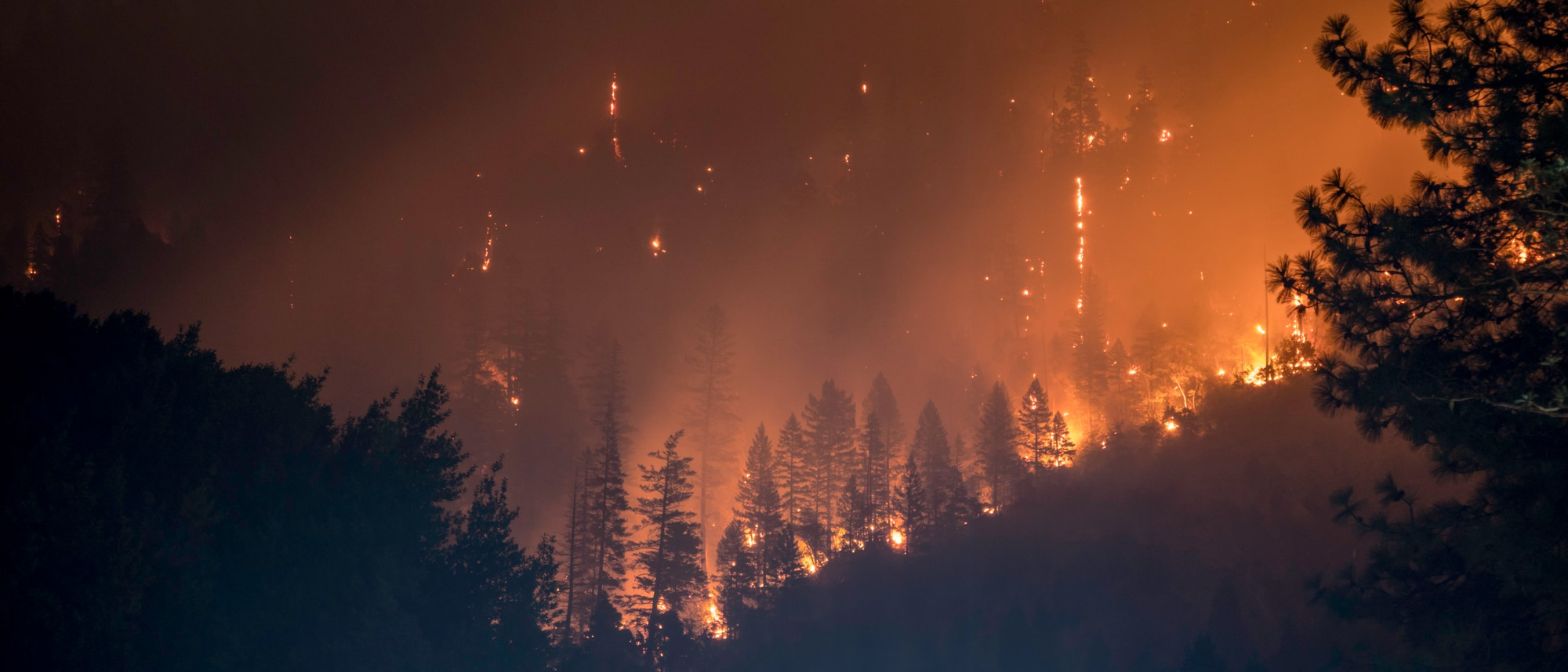 2021- A Summer of Extreme Heat and Wildfires